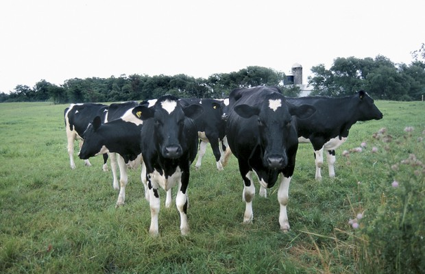 National Milk Producers Federation Pushing For Market Access In TPP
