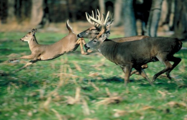 Fewer Deer Being Donated