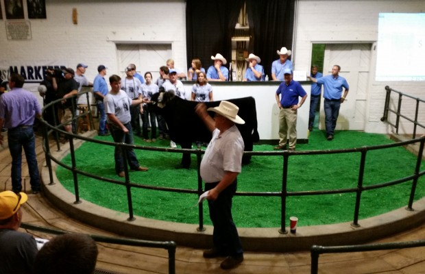 Iowa Governor's Steer Show Hits A Record